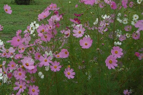 心やすまる季節の花