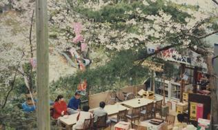 春だ、桜だ、お祭りだ